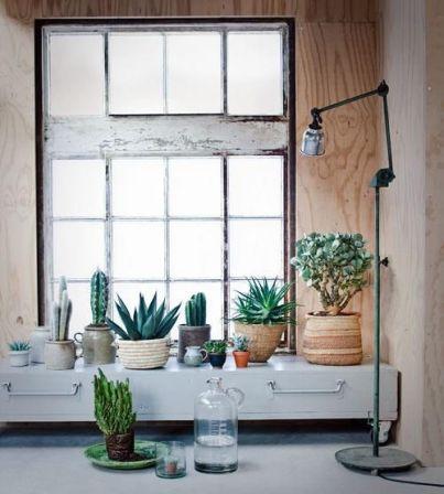 plantes fenêtre