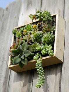 plantes succulentes balcon