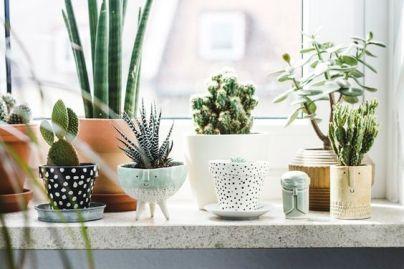 plantes succulentes terrarium